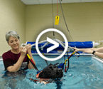 Canine Aquatic Therapy